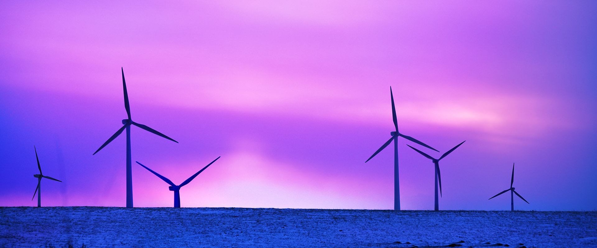 purple offshore windfarm